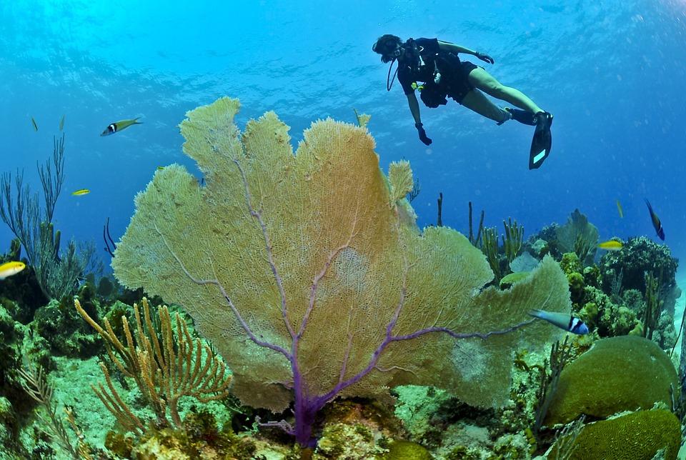Biodiversité marine Madagascar
