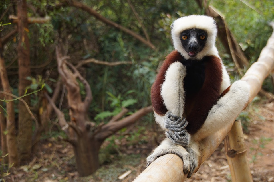 Parc Ankarana Madagascar