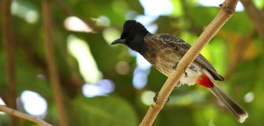 Oiseaux à Nouméa