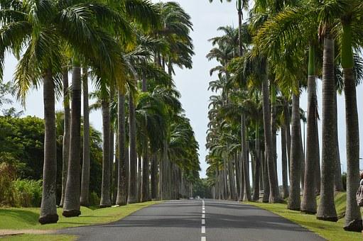 Rue bordée de cocotier Guadeloupe