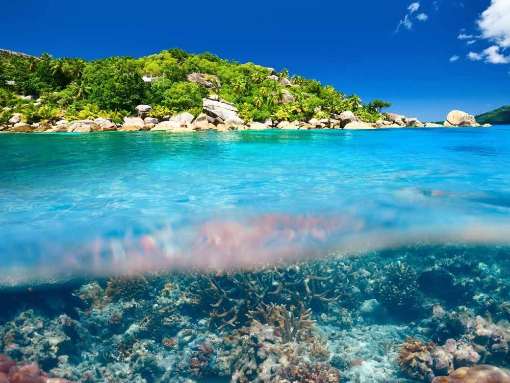 Nature originelle des Seychelles