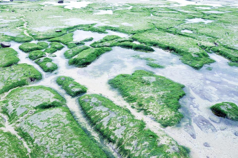 Plage Plantes Aquatiques